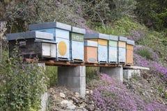 Colmenas y flores de la abeja de la miel en naturaleza Imágenes de archivo libres de regalías