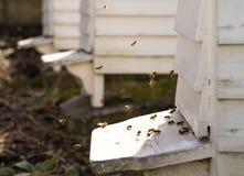 Colmenas y porciones blancas de abejas Foto de archivo libre de regalías