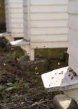Colmenas y porciones blancas de abejas Imagenes de archivo