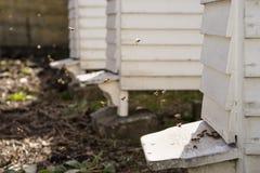 Colmenas y porciones blancas de abejas Fotografía de archivo