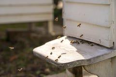 Colmenas y porciones blancas de abejas Imagen de archivo libre de regalías