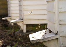 Colmenas y porciones blancas de abejas Imagen de archivo