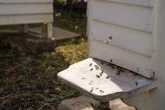 Colmenas y porciones blancas de abejas Fotografía de archivo libre de regalías