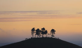 Colmers Hügel, Dorset, England Stockfoto
