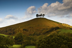 Colmers Hill. Trees on the top of Colmers Hill in Dorset Stock Photo