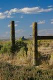 Colmillo del verraco a través de la cerca vieja Imagen de archivo libre de regalías