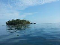 Colo del mamey de Isla Imagen de archivo