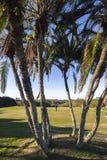 Colocação verde dos jogadores do golfe Fotografia de Stock