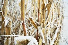 Coloca o inverno Fotos de Stock