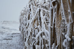 Coloca o inverno Imagens de Stock