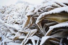Coloca o inverno Fotografia de Stock Royalty Free