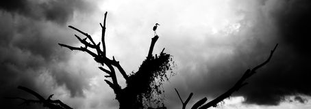 Colocación contra viento y marea - de poder de la garza Foto de archivo libre de regalías