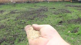 Colocación de la semilla de la hierba en césped almacen de video