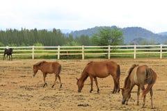 Colocación de los caballos Imagen de archivo