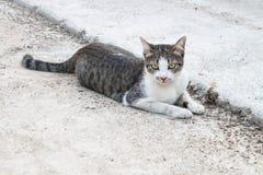 Colocación del gato fotografía de archivo libre de regalías