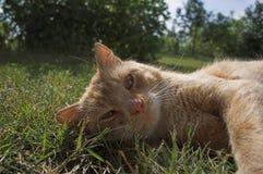 Colocación del gato Fotografía de archivo