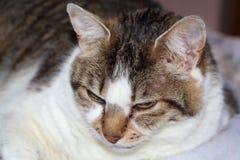 Colocación del gato de Tabby Foto de archivo