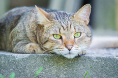 Colocación del gato marrón Imagen de archivo
