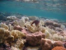 Colocación en el coral Imagenes de archivo
