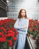 Colocación en flor rojo Fotos de archivo libres de regalías