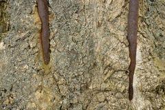 Colocaciones oxidadas arraigadas a la madera foto de archivo