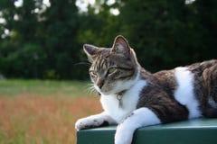 Colocando o gato Fotografia de Stock