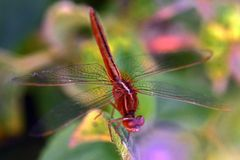 Coloered Grasshopper Stock Images