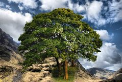 Colofrul mountain range with tree Stock Photography