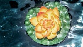 coloful莲花顶视图在黑暗的水的 库存照片