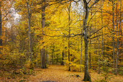 Coloful autumn forest path Royalty Free Stock Photos
