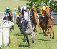 Coloful dżokeje na cwał arabskich biegowych koniach szaleje naprzód wewnątrz Obrazy Stock