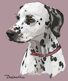 Coloful hand drawing vector portrait of dalmatian Stock Photography