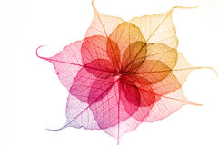 Coloful leaves seamless. On white background royalty free stock photography