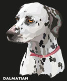 Coloful vector portrait of dalmatian Royalty Free Stock Image
