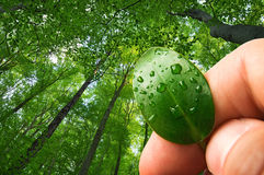 Écologie de nature, conservation de forêt Image libre de droits