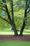 Cologne botanic gardens. Two trees in cologne botanic gardens stock photos