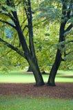 cologne botaniczni ogródy zdjęcia stock