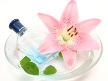 Cologne and pink lily Stock Photo