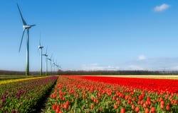 cololored för tulpanturbiner för fält mång- wind arkivfoto