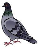 Colomba del piccione Fotografie Stock Libere da Diritti