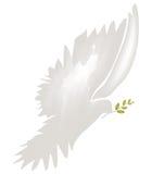 Colomba del vettore di pace Immagine Stock Libera da Diritti