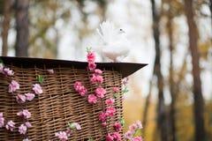 Colomba di bianco - nozze Fotografia Stock