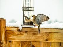 Colomba di dolore all'alimentatore dell'uccello immagini stock libere da diritti