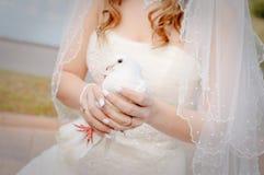 Colomba di nozze Immagini Stock Libere da Diritti