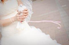 Colomba di nozze Immagini Stock