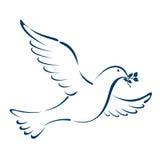 Colomba di pace Fotografie Stock Libere da Diritti