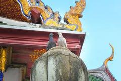 Colomba due Stando sul tetto del tempio Wat Suthat Il giorno A Bangkok thailand fotografia stock