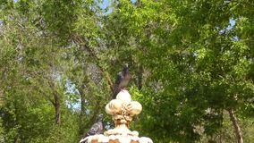 Colomba e fontana video d archivio