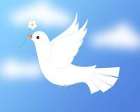 Colomba/piccione di bianco Immagine Stock Libera da Diritti