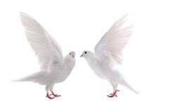 colombe Image libre de droits